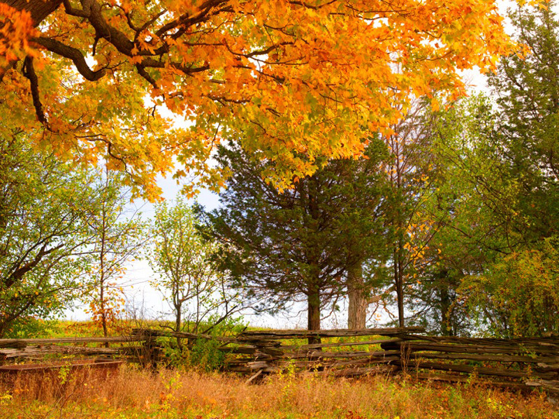 willey_071026x_fall_789_shrp_lg-1153